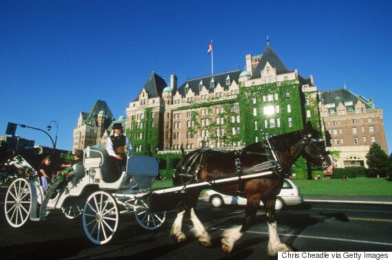 Horse-Drawn Carriages In Victoria, B.C. Should Be Banned: