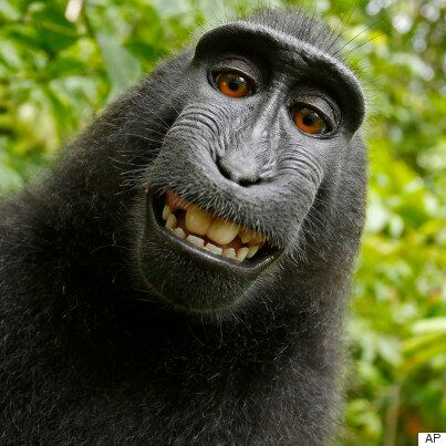 Monkey's GoPro Selfie At Wildlife World Zoo Is Just So