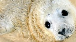 The Government's Grey Seal Cull Is Not Based on