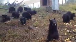 Nothing To See Here Except 25 Orphaned Bear Cubs Eating