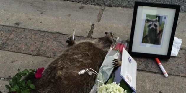10 Reasons Why #DeadRaccoonTO Became a National News