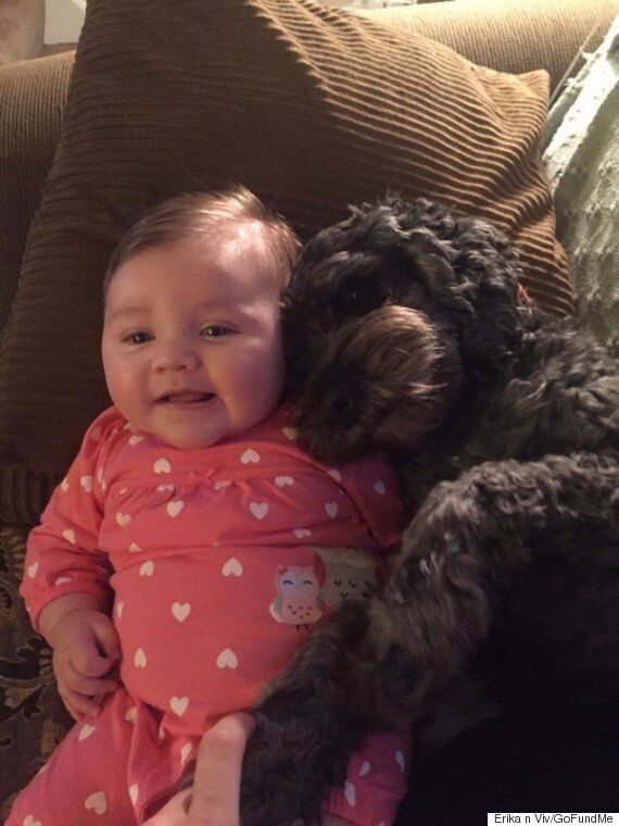 Family Dog Dead After Saving Baby From House
