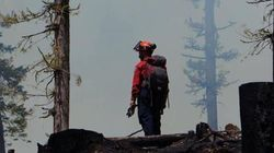 Qualified B.C. Tree Fallers Not Allowed To Help Fight