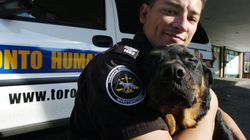 Burden Of Enforcing Animal Cruelty Laws Falls On Underfunded