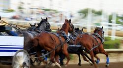 Second Horse Put Down At Calgary