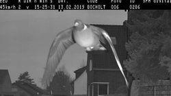 독일의 한 도시가 비둘기에게 과속 벌금을