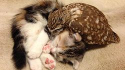 These Unlikely Friends Will Make You Want To Cuddle