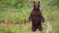 'Scat Seekers' Wanted To Collect Bear Poop In