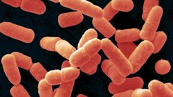 Introducing A New Probiotic: Bacillus