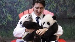 These Panda Cubs Are Coming To Calgary. (Sorry,