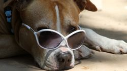Keeping Your Dog Cool On Hot Summer