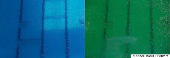 Olympic Diving Pool Turned Green And No One Knows