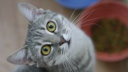 Happy International Cat
