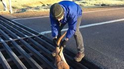 WATCH: Dad Rescues Kangaroo From A Tight
