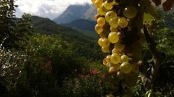 Autochthonous Italian Wine From The Mountains Available In