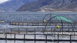 Ending Open-Net Salmon Farming Is The Only Way