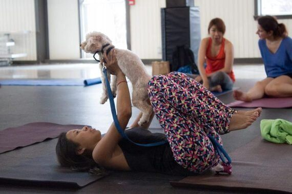 Dog-Friendly Yoga Helps Owners And Pets Hit Paws On