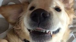 This Dog Wearing Braces Is The Cutest Thing You'll See