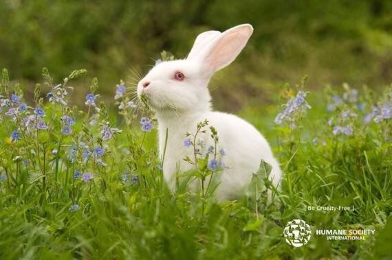 Switching To Cruelty-Free Cosmetics Is Easier Than You