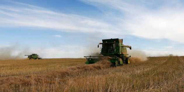 Farmers drive combines harvesting canola while harvesting on Barry Lang's farm near Beiseker, Alberta,...