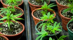How Canada's Medical Marijuana Ruling Will Affect
