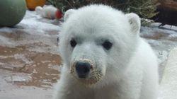 Hey Canada, Say Hello To Little Juno The Polar