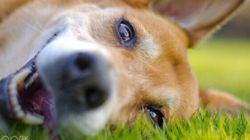Does Your Dog Love You Back? Science Says