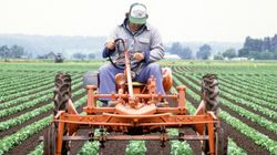 Farmers Want Feds To Let Them Hire More Temporary Foreign