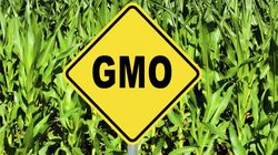 Pro-GMO Crusaders' Efforts To Silence Critics Won't Solve