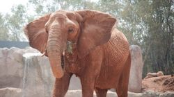 Elephant Kills Young Girl With Rock At Morocco