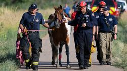 Rescue Footage Of 'Cupcake' The Horse Will Make Your Heart