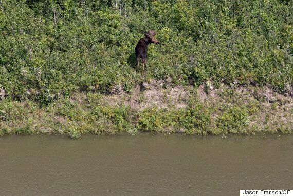 Saskatchewan Oil Spill: Husky Changes Date It Allegedly Discovered Pipeline