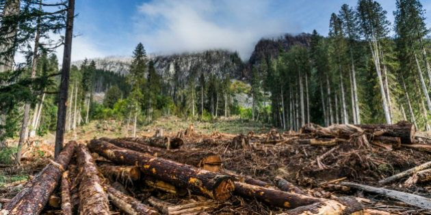 Squamish, British Colombia, Canada - August 11, 2014. High altitude logging clearing with forest-fire...