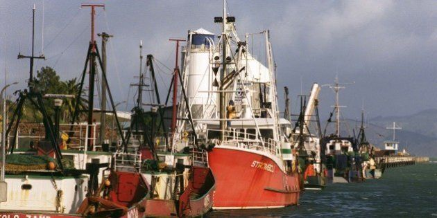 NEW ZEALAND - JUNE 13: Fishing fleet, Port of Gisborne. (Photo by Ross Setford/Getty