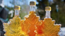El Nino Threatens Canada's Maple Syrup