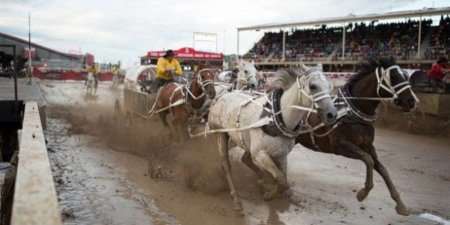 Calgary Stampede Says No Animals Were Harmed This