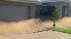 Tumbleweed Invading Australia Has The Most Perfect Name