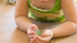 DIY Insect Repellent To Keep Your Home Bug