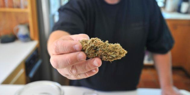 On Wednesday, Sept. 18, 2013, Frank, a marijuana caregiver who does not want to reveal his last name, holds up marijuana buds from plants he has grown for use as medical marijuana for legally approved patients.  (Photo by Gordon Chibroski/Portland Press Herald via Getty Images)
