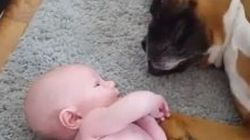 WATCH: Dog Shows Love For Baby, Gets A