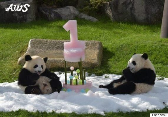 This Panda Just Wants To Have Fun. So Why Stop It?
