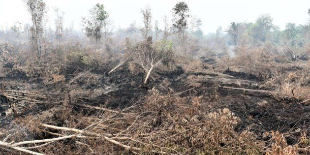 A general view shows fire damaged forest and peatlands, surrounding Palangkaraya city, in Central Kalimantan...