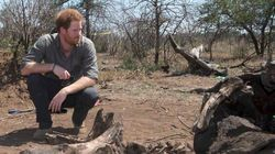 Prince Harry Calls Animal Poaching A 'Pointless Waste Of