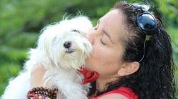 Pet Bereavement Is No Different Than Human