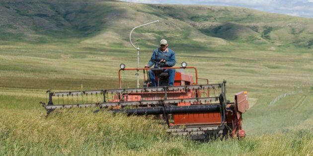 Canada, Alberta, Porcupine Hills, Farmer harvesting feed oats on a ranch near the Cowboy Trail. (Photo...