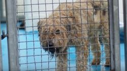 Massive Puppy Mill Busted In