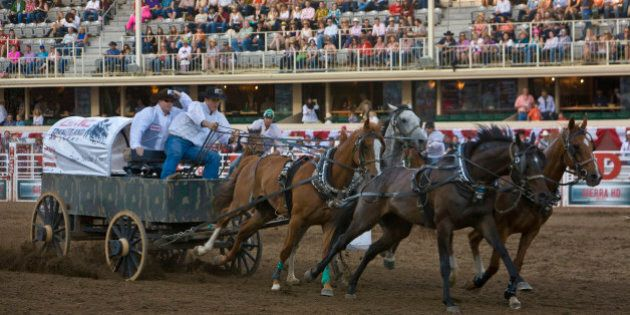 CALGARY, CANADA - JULY 6: The competitive chuckwagon races are a big draw for grandstand spectators on...