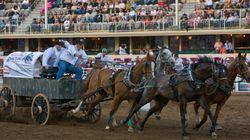 Chuckwagon Safety A Priority At This Year's Calgary