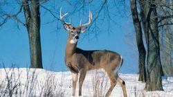 Alberta Man Fined For Shooting At Deer In Wildlife
