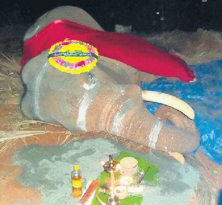 Elephant Abuse In Kerala Has Finally Gone